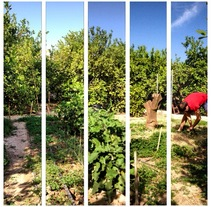 Fotografía móvil . A Photograph project by Tania Martín - 08-09-2014