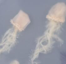Jellyfish. Un proyecto de Bellas Artes y Collage de Sonia Alins Miguel - 27-02-2017